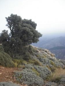Sierra-de-Lujar-06