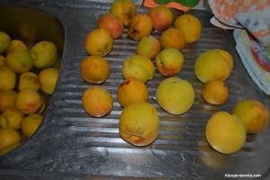 Melocotones lavados para su preparación de mermelada de melocotón