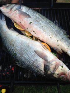 fish-928674_1920
